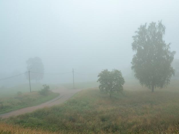 Una nebbiosa strada estiva con pali del telegrafo.