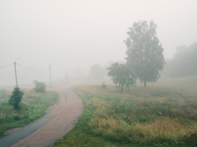 Strada nebbiosa del villaggio estivo. focalizzazione morbida