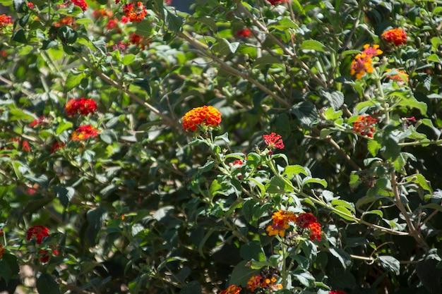 Fogliame di piante mediterranee siciliane