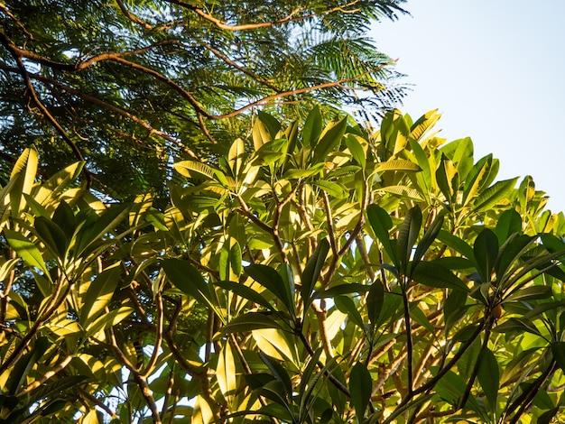 Il fogliame degli alberi contro il cielo blu.