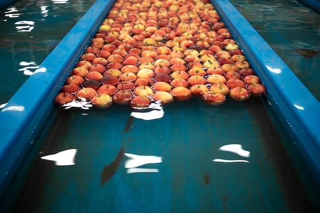 Serbatoi convogliatori acqua lavorazione alimentare con frutta mela galleggiante