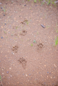 Piede animale a terra