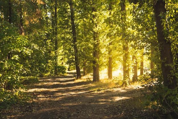 Sentiero nella bellissima foresta autunnale sullo sfondo del suset