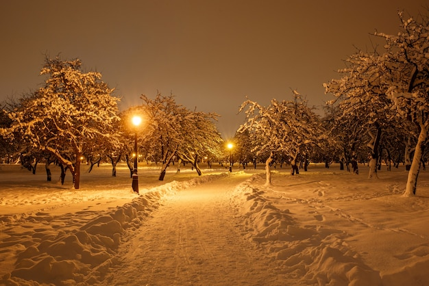 Sentiero per pedoni in un parco cittadino d'inverno.