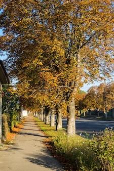 Sentiero con castagni in autunno