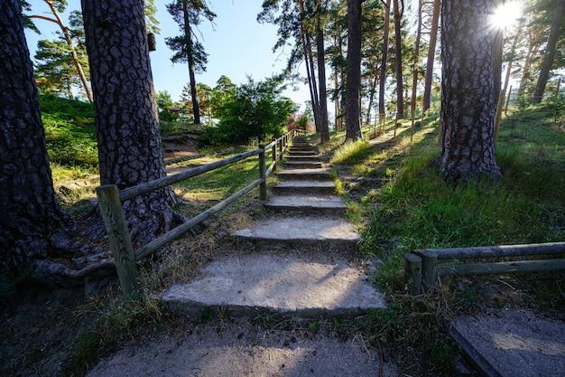 Sentiero con gradini nella foresta con alberi ad alto fusto e raggi di sole. navacerrada.