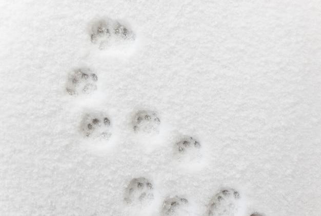 Alle impronte nella neve