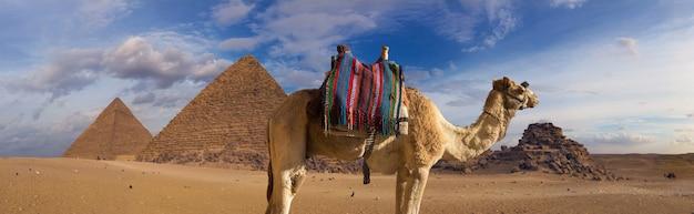 Primo piano di un cammello dromedar sullo sfondo della sagoma delle grandi piramidi
