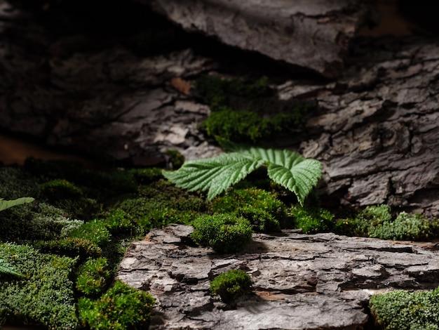 Sfondo della foresta, muschio e corteccia d'albero. primavera. sfondo verde.