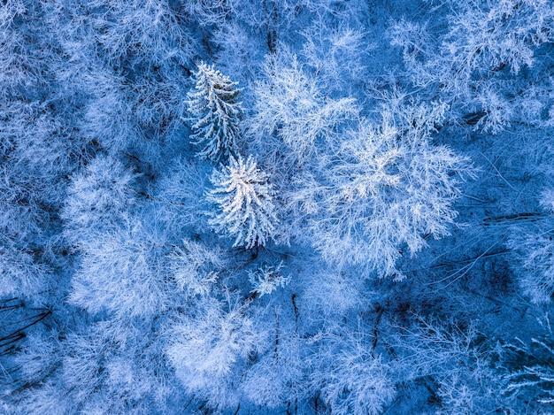 Foresta all'inizio dell'inverno. brina e neve sui rami. vista dall'alto verticalmente verso il basso
