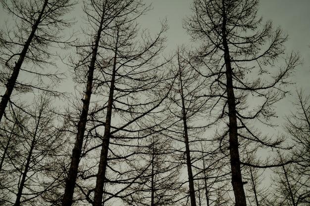 Foresta, grande albero, sfondo di natura