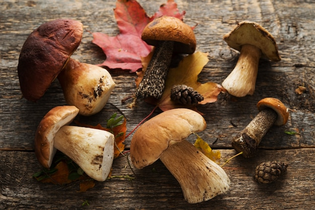 Funghi porcini di bosco su legno rustico