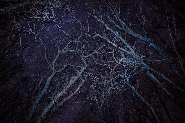 Foresta, fuoco accogliente e cielo notturno blu con molte stelle sopra gli alberi.