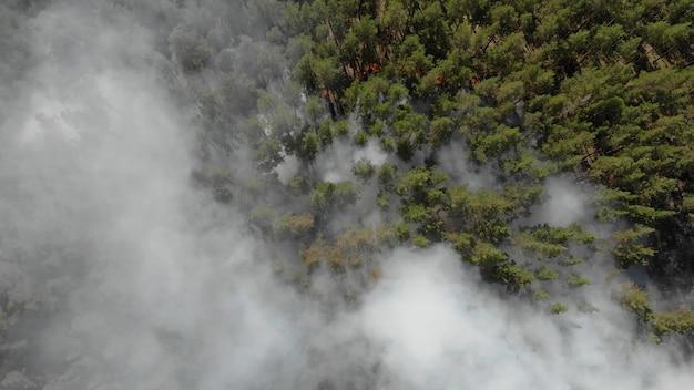 Incendio boschivo con denso fumo nero.