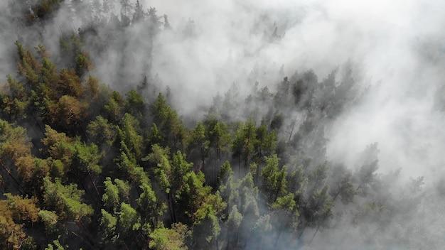 Gli incendi boschivi stanno bruciando violentemente.