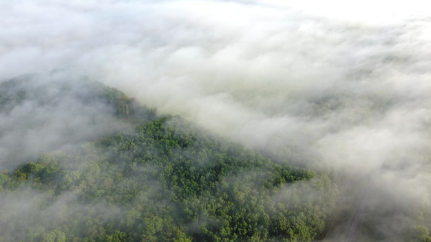 Foresta nella vista aerea della nebbia. paesaggio autunnale di mattina al tramonto.