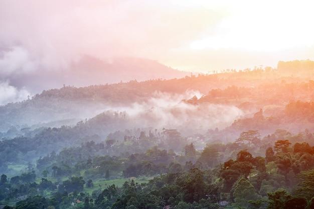 Foresta e nebbia al mattino. isola dello sri lanka
