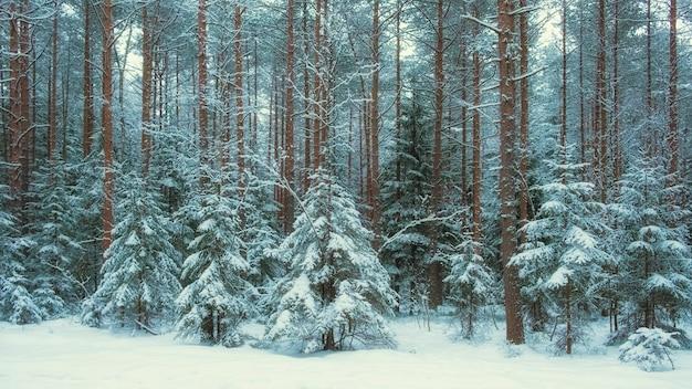 Foresta piccoli alberi di natale nella neve dopo le nevicate invernali