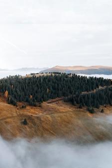 Foresta su una montagna nebbiosa