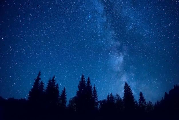 Foresta di notte con alberi di pino sotto il cielo blu scuro con molte stelle