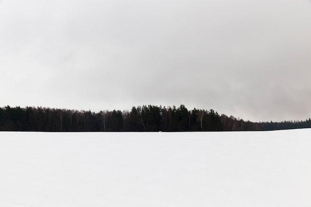 Foresta fotografata durante l'inverno dopo l'ultima nevicata, nebbia e scarsa visibilità, sagome spaziali di alberi e foschia nel campo