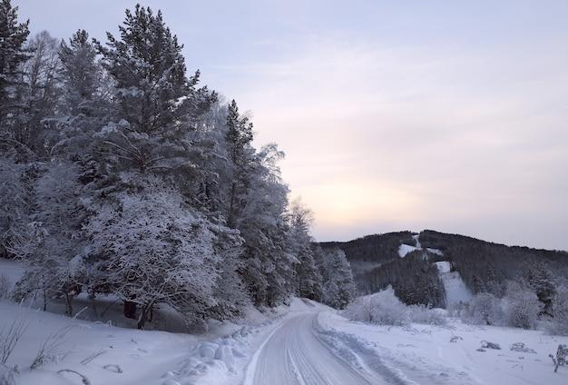 Strada forestale nella foresta invernale ai piedi degli alberi altai ricoperti di montagna di neve