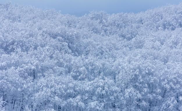 Foresta nella neve in una mattina d'inverno