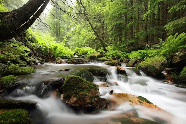 Flusso della foresta che scorre giù dalle montagne Foto Premium