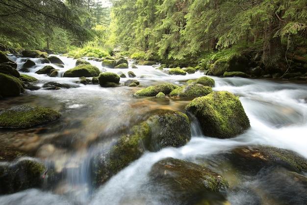 Flusso della foresta che scorre giù dalle montagne