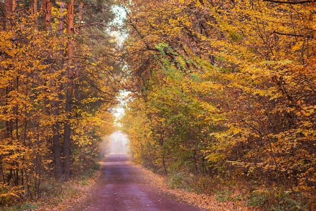 Foresta nella strada circostante
