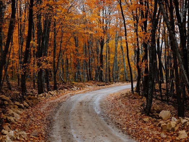 Sentiero nel bosco alberi autunno foglie d'oro natura