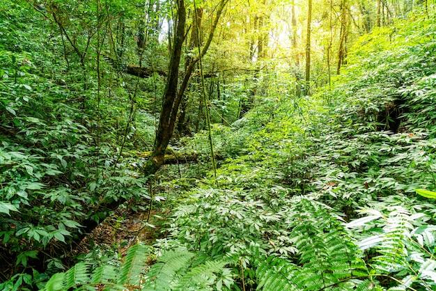 Alberi della foresta. natura verde legno luce del sole e cielo