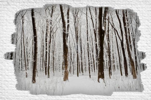 Foresta alberi natura neve legno sfondi inverno isolato per la pubblicità