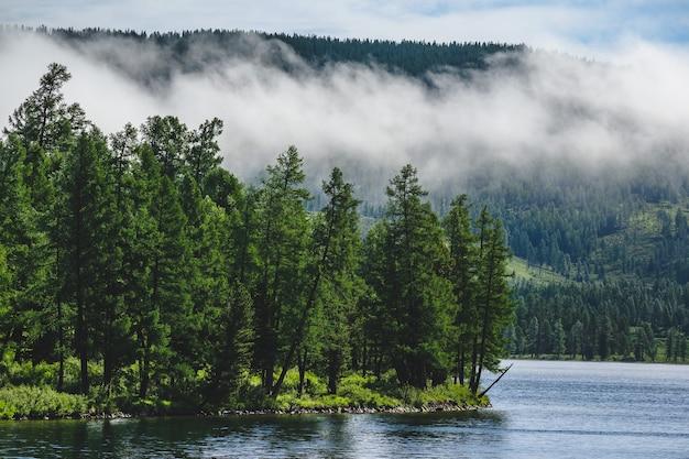 Alberi della foresta sulla riva di un lago di montagna nel distretto di ulagansky della repubblica di altai, russia