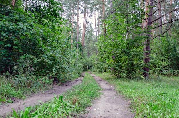 Nella foresta, due percorsi pedonali si sono fusi in uno.