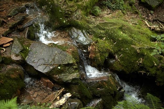 Cascata nella foresta, piccolo ruscello di montagna, pietre ricoperte di muschio verde