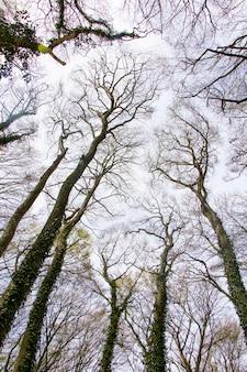 Foresta e alberi selvatici paesaggio in georgia. inquadratura dal basso.