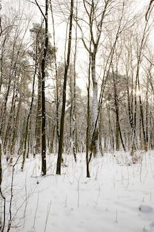 Foresta nel periodo invernale