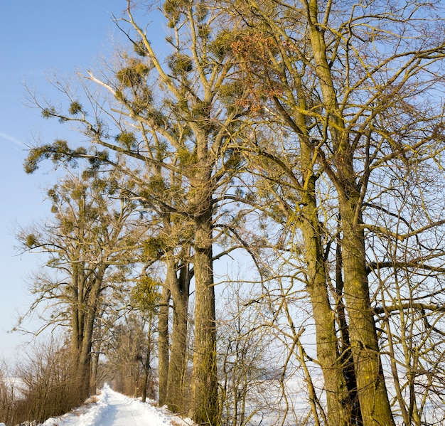 Foresta in inverno