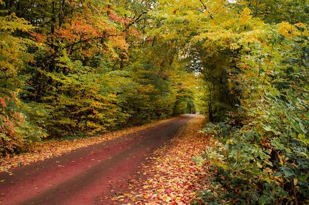 Foresta con tanto sole caldo. alberi di autunno nella foresta foresta al tramonto in autunno