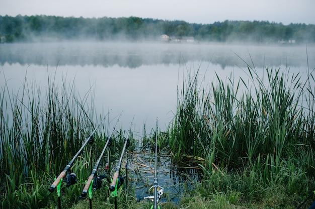 Quattro canne da pesca della carpa in baccello su una superficie del lago