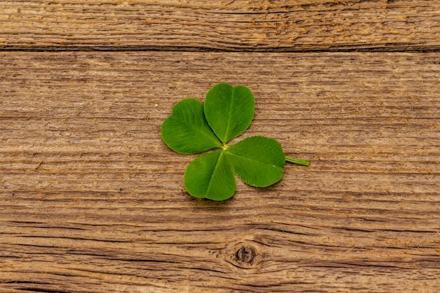 Quadrifoglio, pianta fresca su tavole di legno d'epoca