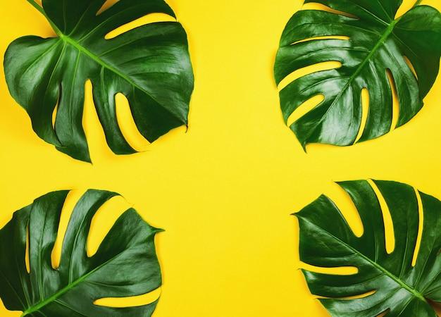 Quattro mostri di filodendro su sfondo giallo.