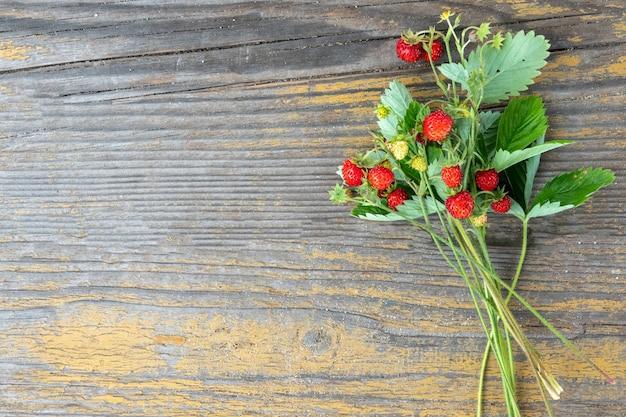 Fragaria vesca, fragola europea, fragola di bosco. cespuglio di fragola selvatica con bacche rosse lucide mature su sfondo verde. primo piano maturo della bacca rossa all'aperto.
