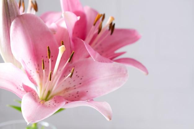 Un frammento di mazzo di gigli rosa su uno sfondo bianco