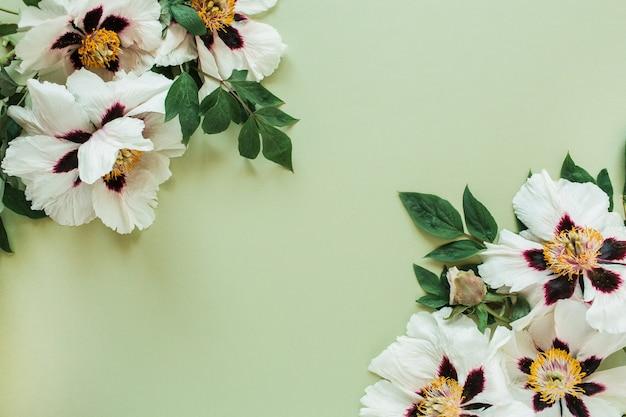 Bordo del frame di fiori di peonie bianche