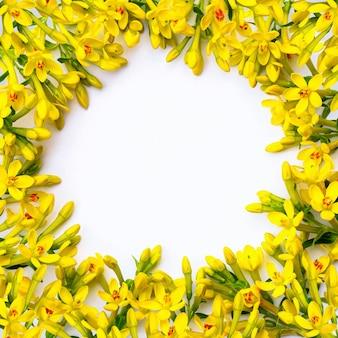 Cornice composta da tanti piccoli ramoscelli con fiori primaverili gialli su sfondo bianco