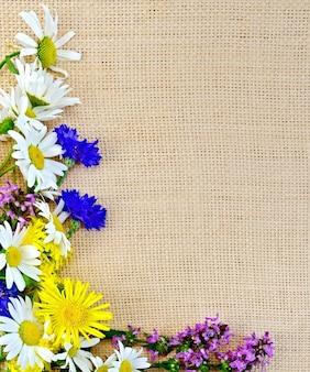 Cornice di fiori camomilla, fiordaliso, elecampane, ortica su sacco