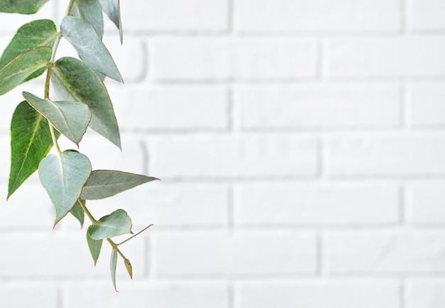 Cornice fatta di ramo di eucalipto sul muro di mattoni bianchi con spazio di copia.
