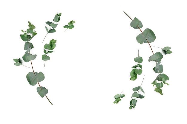 Cornice fatta di rami di eucalipto su sfondo bianco. vista piana, vista dall'alto, mock up.